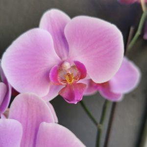 Plantes et Orchidées